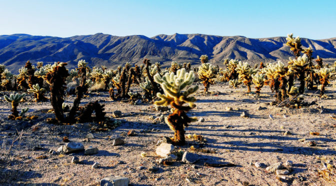 8. února – Joshua Tree a Grand Canyon