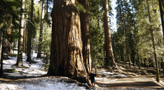11. února – Sequoia NP