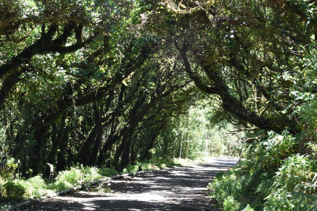 tunel ze stromů kolem silnice