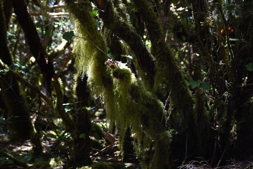 dlouhé mechy na větvích, osvětlené