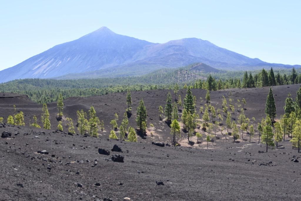 Sopečná krajina, v pozadí hora Pico del Teide, zelené borovice