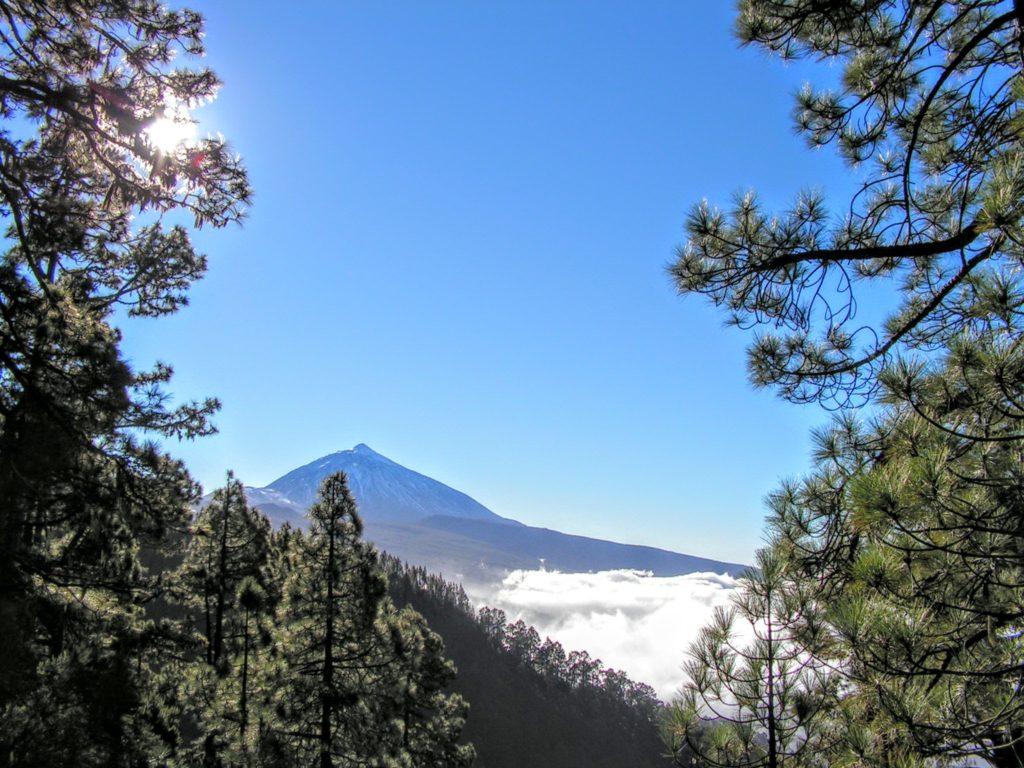 Vrchol Pico del Teide z dálky, v popředí borovice