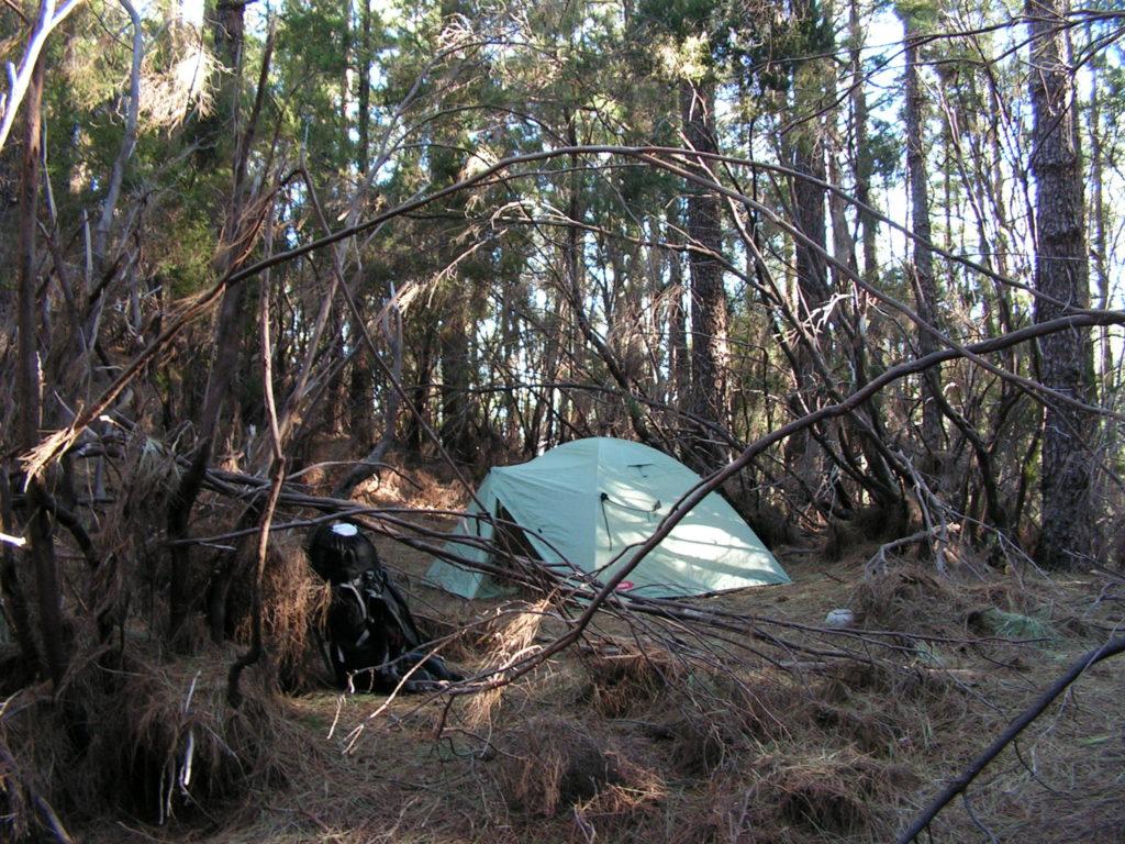 Stan uprostřed lesa, zima, uschlá tráva